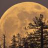 """Ay'ın En İhtişamlı Görüleceği Merakla Beklenen """"Süper Ay"""" Bu Gece Geliyor!"""