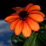 NASA'dan Önemli Tavsiye: Bu Bitkileri Evinizde Mutlaka Barındırın!