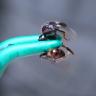 Yine O Manyak! Dünyanın En Acı Verici İğnesine Sahip Böceğine Kendini Sokturan Adam!