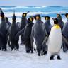 Karda Yürürken Kayıp Düşmemeniz İçin Efsane Öneri: Penguen Gibi Yürüyün
