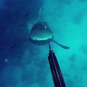 Üzerine Saldıran Köpekbalığına Zıpkınla 'Tek Atan' Dalgıç