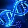 Bilim İnsanları Hücreleri Gençleştirme Yöntemiyle Canlıların Ömrünü Uzatmayı Başardı