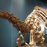 İnanılmaz Bir Keşif: 195 Milyon Yıllık Yumuşak Doku!