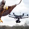 Fransa, Eğittiği Dört Kartalla 'Niyeti Bozuk' Drone'ları Avlayacak!