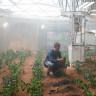 Marslı Filmi Gerçek Oluyor: NASA Mars'da Patates Üretecek!
