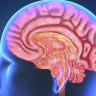 Travmatik Beyin Hasarının Erken Tedavisi Hayat Boyu Hastalığın Önüne Geçebilir!