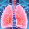 Bilim İnsanlarından Açıklama: Akciğer, Sadece Soluk Almakta Görevli Değil!