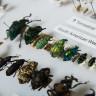 10 Milyon Dolarlık Efsane Böcek Koleksiyonu!