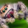 Örümceklerden Bir Kat Daha Fazla 'Tırsmamıza' Sebep Olacak Araştırma ve Sonuçları!