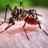 Bilim İnsanlarından Sivrisineklerle İlgili Yeni Keşif!