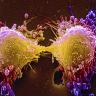Kanser Hücrelerinin Kendi Kendini Yok Etme Mekanizması Keşfedildi!