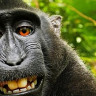 Maymunun Çektiği Selfie Tartışma Yarattı