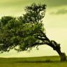 Dünyamızın Kaç Ağaç Türüne Ev Sahipliği Yaptığını Biliyor Musunuz?