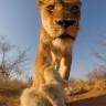 GoPro'yu Çalıp Bir Nevi Kendi Belgeselini Çeken Aslan