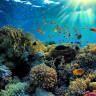 Dünya Denizlerinin Yaşam Kaynağı Yok Oluyor: Büyük Bariyer Resifi Ölüyor!