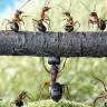 Karıncalar 30 Milyon Yıl Önce Çölde Tarım Yapmaya Başlamışlar!