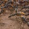"""Yaralı Karıncayı Kurtarmaya Gelen """"Karınca Kurtarma Timi"""""""