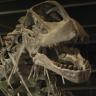 Camarasaurus İsimli Dinozorun Bugüne Dek Bilindiğinden Daha Farklı Bir Görüntüsü Olduğu Ortaya Çıktı