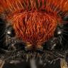 Böceklere Bakış Açımızı Değiştirebilecek Nitelikte 9 Güzel Böcek!