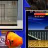 Balıklar Street Fighter II Oynuyor!