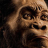 Beynimizin Üçte Birine Sahip Olan Eski İnsanlar, Düşündüğümüzden Çok Daha Zekiler!