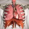 Röntgen ve Ultrasonu Unutun: İnsan Vücudunu Canlı Olarak Gösteren Bir Sistem Geliştirildi!