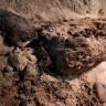 Mısır'da 2000 Yıldır El Değmemiş Bir Odada 17 Mumya Keşfedildi!