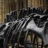 110 Milyon Yıllık Dinozorun Cildi Hala Nasıl Korunabiliyor?