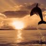 Mucizevi  Cevaplarıyla: Hayvanlar Su Altında Nasıl Çiftleşirler?