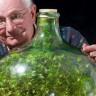 İçine Bir Damla Bile Su Konulmadan 40 Yıldır Yaşayan Bitki!