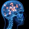 Beyinlerimiz, Farklı İnsan Yüzlerini Nasıl Hafızada Tutuyor?