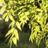 Bilim İnsanları, Fotosentez Yapan Yapay Yapraklar Üretti!