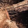 Stop Motion Tekniğiyle Çekilmiş Kütük Kesme Videosunda, İlginç Görüntüler Ortaya Çıktı