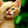 İnsanoğlunun Kedilerle Olan İlişkisi, Meğer 9 Bin Yıl Öncesine Dayanıyormuş!
