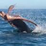 Bir Fok Balığı ve Dev Ahtapot Arasındaki Viral Olan Ölümcül Dövüş!