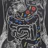 Bağırsak Mikroplarının Duygusal Davranışlarımızı Etkilediği Ortaya Çıktı!