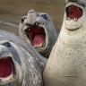 Gülme Garantili: Yılın En Komik 'Vahşi Yaşam' Kareleri Seçildi!
