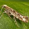 Amerika'nın Genetiği Değiştirilmiş Böcekleri New York'a Geliyor!