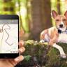 Bu Cihazla Evcil Hayvanınızın Yerini Tespit Edebileceksiniz!