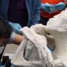 Peru'da Uzaylıya Ait Olduğu İddia Edilen Bir Mumya Bulundu!