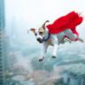 Bilim İnsanları, Genetiği Modifiye Edilmiş Bir 'Süper Köpek' Klonladılar!