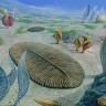 Bilim İnsanları, 580 Milyon Yıl Önce Yaşamış Bu Canlıların Ne Olduklarını Açıklayamıyorlar