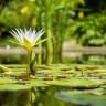 Yeni Çalışma Kayıp Bitki Türlerinin Diriltilmesini Sağlıyor