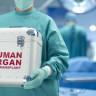 Nanopartiküller, Organ Nakillerinde Vücudumuzu Kandırarak Organ Reddini Önlüyor!