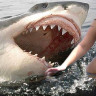 Eğer Bir Gün Köpek Balığı Saldırısına Uğrarsanız Ne Yapmalısınız?
