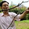 Çin, 64 cm Boya Sahip Dünyanın En Uzun Böceğini Yetiştirdi!