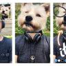 Instagram Mesajlar ve Hikayelere Görüntülü Yanıtlama Özelliği Geldi!