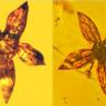100 Milyon Yıllık Bitki, Kehribar Taşının İçinde Hiç Bozulmamış Halde Bulundu!