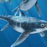 200 Milyon Yıllık Deniz Sürüngeni Fosilinin Karnında Doğmamış Bebek Keşfedildi!