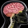 Beynimiz İletişimi Biyofotonlar Üzerinden Optik İletişim Kanallarıyla Sağlıyor Olabilir